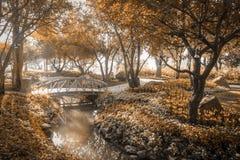 Ponte de madeira no jardim na cor do sepia da luz do sol da manhã Imagem de Stock