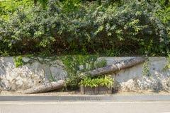 Ponte de madeira para animais Fotos de Stock Royalty Free