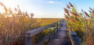 Ponte de madeira que conduz no pântano Imagem de Stock