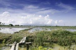 Ponte de madeira que cruza o campo do canal e de almofada Fotografia de Stock