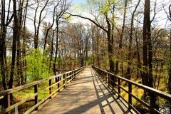 Ponte de madeira só na floresta Foto de Stock