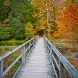 Ponte de madeira sobre a angra na floresta do outono imagem de stock