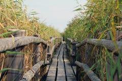 Ponte de madeira velha foto de stock royalty free