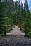 Ponte de madeira velha no lugar só idílico da floresta conífera verde perto do lago Synevyr em montanhas Carpathian, Ucrânia imagens de stock
