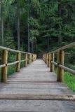 Ponte de madeira velha no lugar só idílico da floresta conífera verde perto do lago Synevyr em montanhas Carpathian, Ucrânia foto de stock royalty free