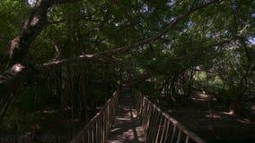 Ponte de madeira velha sob profundamente - a palma verde ramifica filme