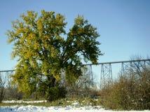 Ponte de nível elevado Foto de Stock Royalty Free