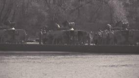 Ponte de pontão - os tanques cruzam o rio vídeos de arquivo