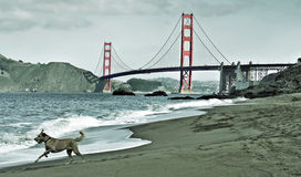 Ponte de porta dourada, San Francisco, Estados Unidos Foto de Stock Royalty Free