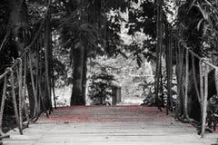Ponte de suspensão com as cordas que conduzem à floresta tropical coberta com as flores vermelhas em pranchas de madeira Foto de Stock