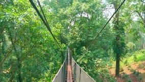 A ponte de suspensão da corda no jardim de Mae Fah Luang, Doi Tung, Chiang Rai, Tailândia vídeos de arquivo