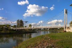Ponte de suspensão no parque imagem de stock royalty free