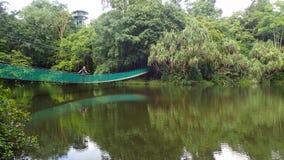 A ponte de suspensão sobre o lago no centro da descoberta da floresta úmida em Sepilok, Bornéu imagem de stock
