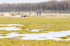Ponte degli ornitologi a piedi Fotografie Stock Libere da Diritti