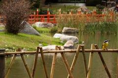 Ponte del Giappone nel parco immagini stock