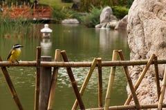 Ponte del Giappone nel parco con l'uccello fotografie stock