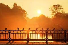 Ponte del piccione di alba immagini stock libere da diritti