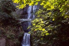 Ponte della cascata attraverso fogliame fotografia stock