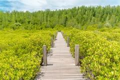 Ponte della natura Fotografie Stock
