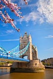 Ponte della torre a Londra alla molla Fotografie Stock Libere da Diritti
