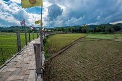 Ponte di bambù di legno sopra il campo di agricoltura dell'agricoltore per la passeggiata attraverso Immagini Stock Libere da Diritti
