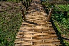 Ponte di bambù di legno sopra il campo di agricoltura dell'agricoltore per la passeggiata attraverso Fotografia Stock Libera da Diritti
