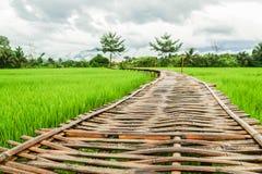 Ponte di bambù lungo nell'alloggio presso famiglie verde del giacimento del riso Immagini Stock Libere da Diritti