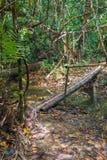 Ponte di bambù nella giungla Fotografia Stock Libera da Diritti