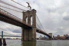 Ponte di Brooklyn e gabbiano fotografie stock libere da diritti
