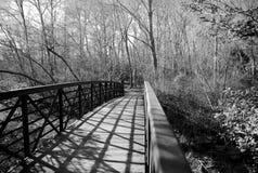 Ponte di camminata in foresta Fotografie Stock Libere da Diritti