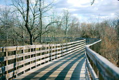 Ponte di camminata in foresta Immagine Stock Libera da Diritti