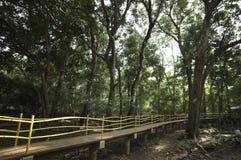 Ponte di camminata nella foresta Fotografie Stock