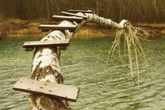Ponte di ceppo di legno sopra il fiume della foresta fotografia stock