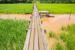 Ponte di legno 100 anni Fotografia Stock