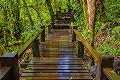 Ponte di legno bagnato Fotografia Stock Libera da Diritti
