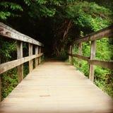 Ponte di legno che conduce nella foresta immagine stock libera da diritti