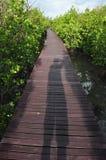Ponte di legno con il rimboschimento della mangrovia in Tailandia Fotografie Stock Libere da Diritti