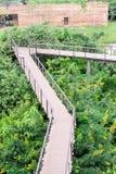 Ponte di legno del percorso della passeggiata del triangolo sopra la foresta pluviale fotografia stock