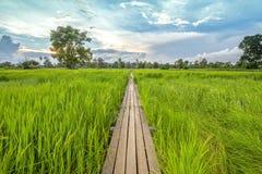 Ponte di legno di 100 anni fra il giacimento del riso con luce solare a N Fotografie Stock Libere da Diritti