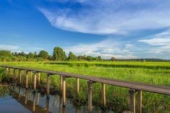Ponte di legno di 100 anni fra il giacimento del riso a Nakhon Ratchasi Fotografia Stock