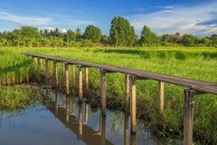 Ponte di legno di 100 anni fra il giacimento del riso a Nakhon Ratchasi Fotografia Stock Libera da Diritti