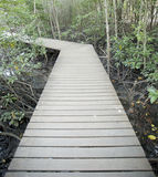 Ponte di legno di modo nella foresta della mangrovia Fotografia Stock