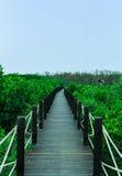 Ponte di legno lungo la foresta della mangrovia Fotografia Stock Libera da Diritti