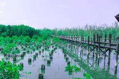 Ponte di legno lungo la foresta della mangrovia Fotografie Stock