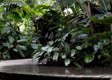 Ponte di legno nel giardino tropicale, pianta verde Fotografia Stock