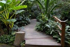 Ponte di legno nel giardino tropicale, pianta verde Fotografie Stock