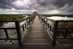 Ponte di legno nel lago del loto al parco nazionale del yod di ROI di Sam di khao Fotografie Stock
