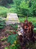 Ponte di legno nella foresta Fotografia Stock