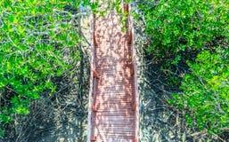 Ponte di legno nella foresta della mangrovia dalla vista superiore Fotografie Stock