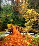 Ponte di legno nella foresta di autunno, Rila Bulgaria Immagini Stock Libere da Diritti